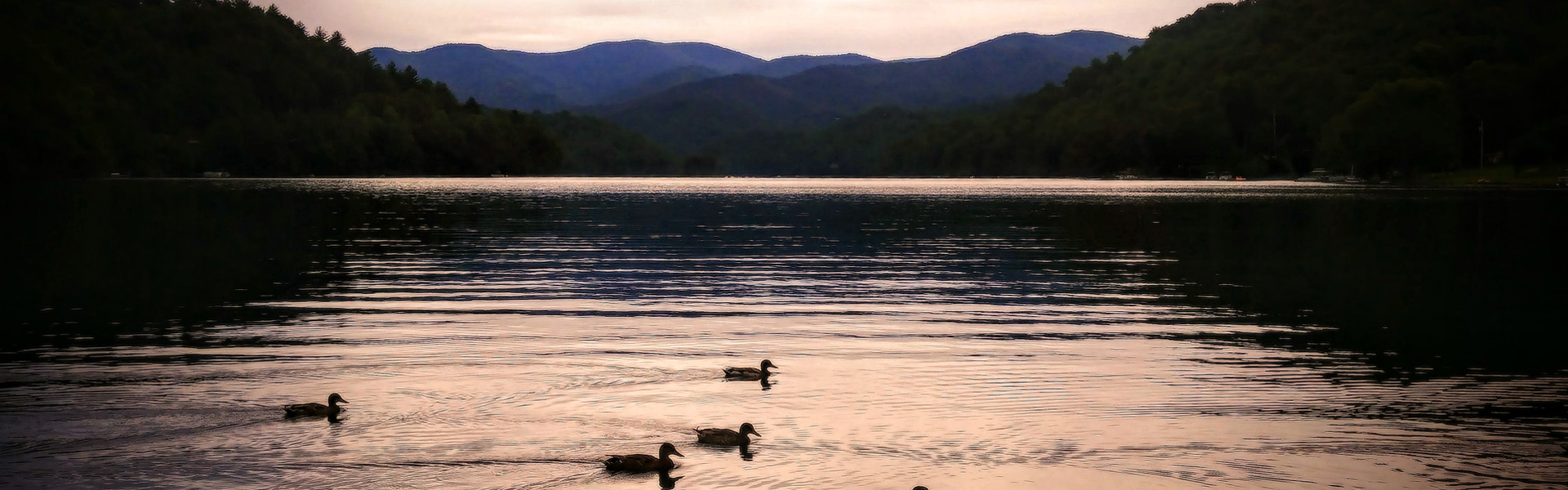 Mtn Lake Ducks